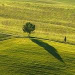 albero in Toscana ANT